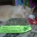 Montana catnip cats