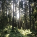 European Woods
