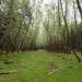 Abandoned Road, Haida Gwaii Canada4032x3024