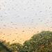 Rain. India.