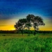 Danada Forest Preserve Wheaton, IL