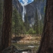 Bridalveil Falls between two sequoia trees. Yosemite National Park, Mariposa, California