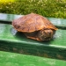 Turtle on a park bench